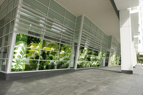 Windows in ViviSpectra Zoom glass with Davallia Fern interlayer